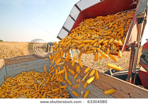 stock-photo-tractor-with-agricultural-machinery-is-harvesting-corn-at-field-63304585.jpg